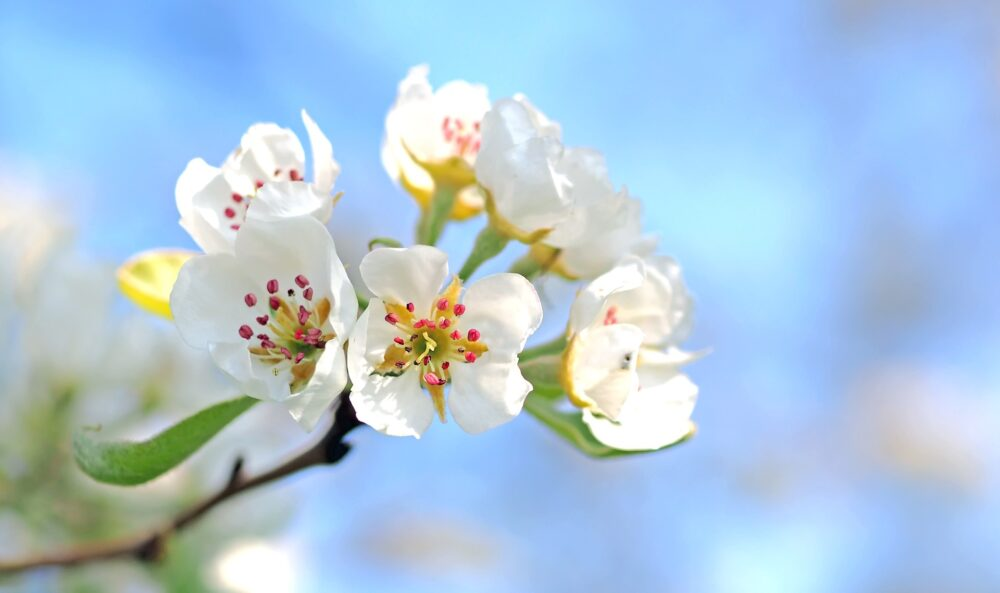 Blommor att plocka. Foto: Pixabay